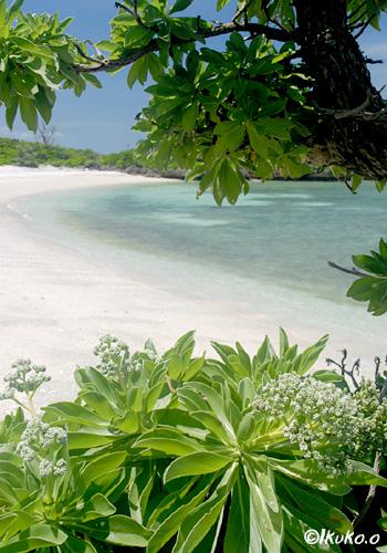 ビーチのモンパの木