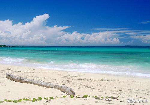 流木と青い海