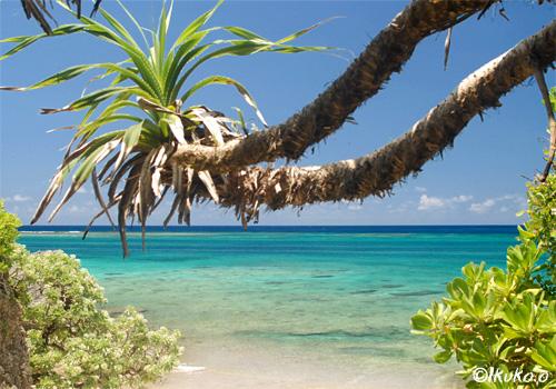 カギンミ(通称ロープビーチ)降り口から見える海とアダン