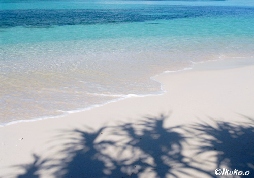 ビーチに映るアダンの影