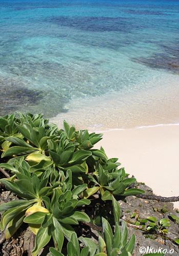 クサトベラと青い海