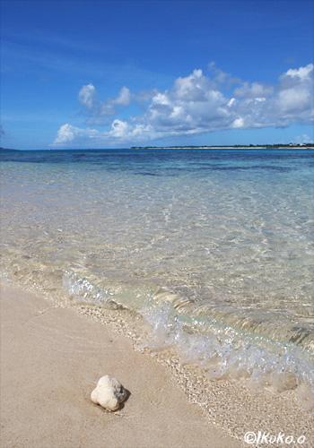 サンゴと波