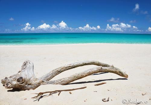 ビーチの流木