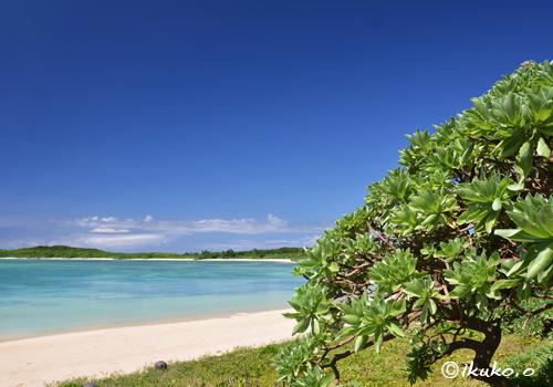 ビーチとモンパの木