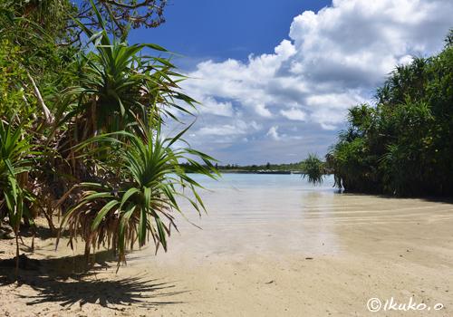 植物の繁る浜