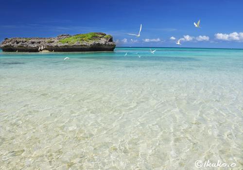 アジサシの舞う浜