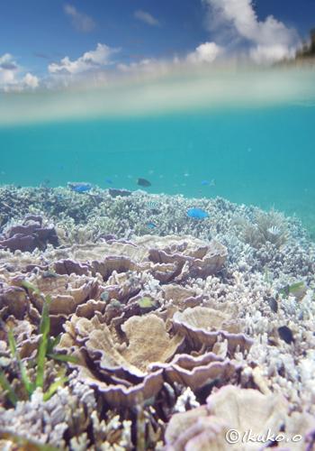 浅瀬のサンゴと青空