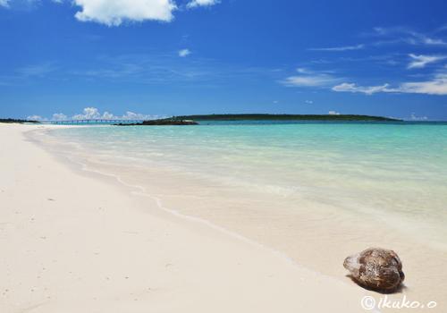 前浜ビーチとヤシの実