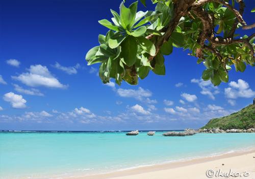 モンパの木と青い海