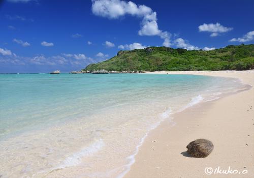 ビーチに流れ着いた椰子の実