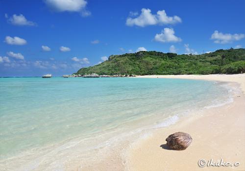 ビーチの椰子の実