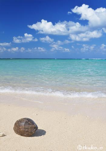椰子の実と青い海