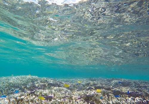 サンゴを映す水面