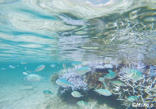 水面に映るサンゴと波紋