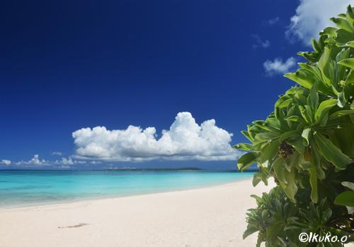 モンパの木とビーチ