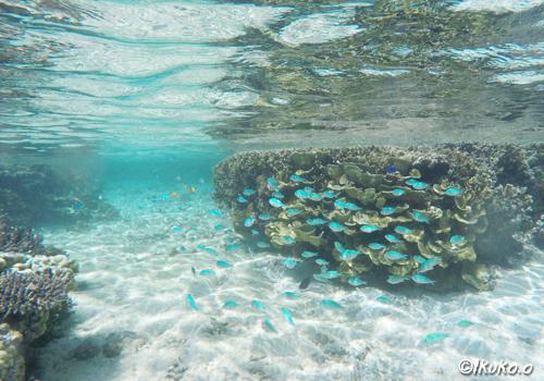 癒しの水中風景