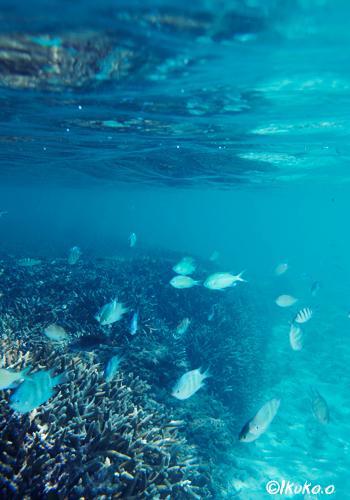 サンゴと魚達