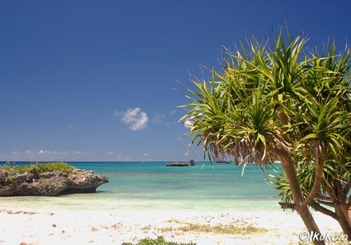 ビーチとアダンの木