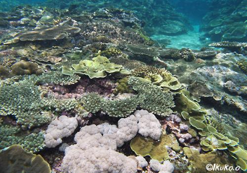 サンゴの楽園