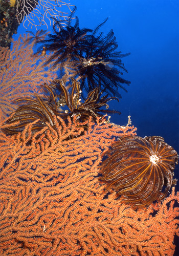 深海に咲く花