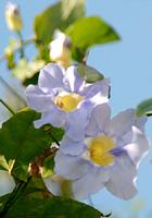 南国の花々