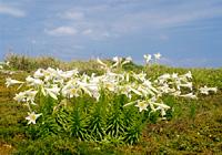 優雅な白い花