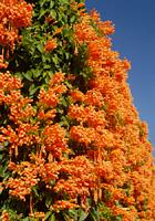 オレンジ色のカーテン