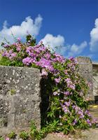 ニンニクカズラの咲く風景