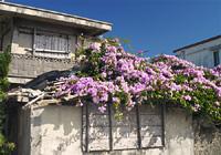 ニンニクカズラの花の屋根