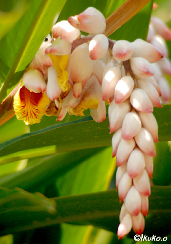朝日を浴びる花