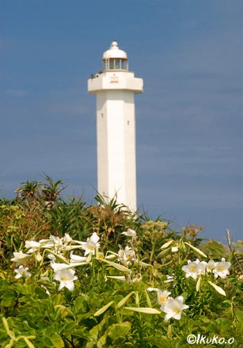 灯台とテッポウユリ