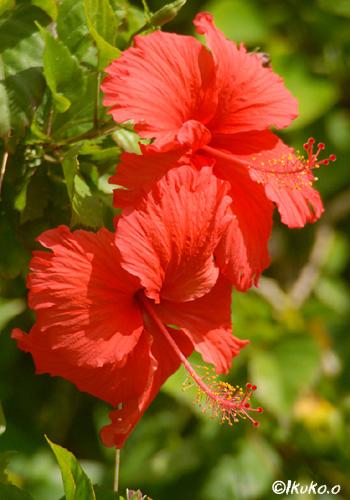 素朴な赤い花