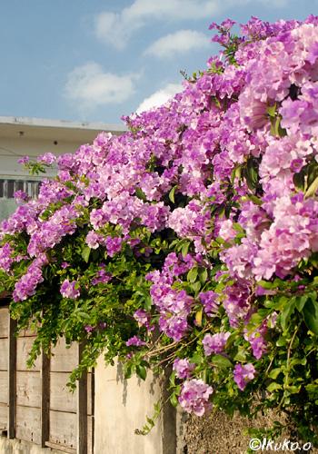 屋根を覆う花
