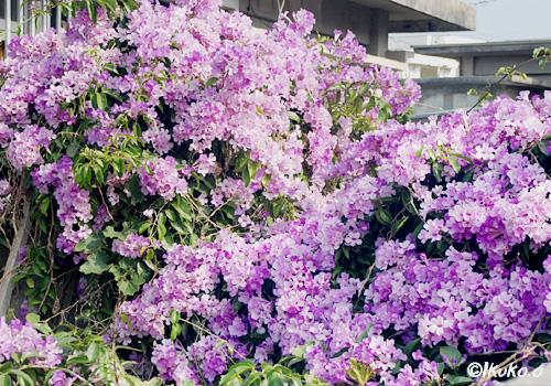 庭を埋め尽くす花