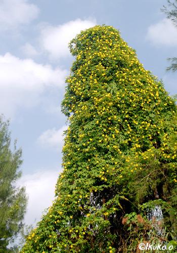 花のツリー
