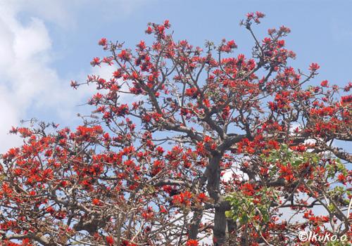 宮古保健所の大木