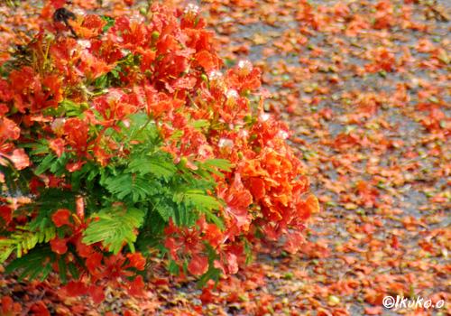 花びらの赤い絨毯