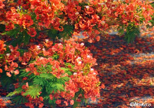 地面に落ちた赤い花びら