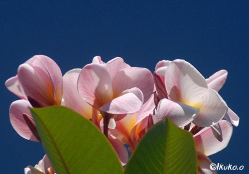 ピンクっぽい花