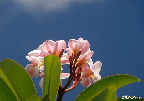 青空へ向けて咲く花