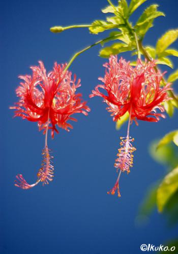 青空と赤い花