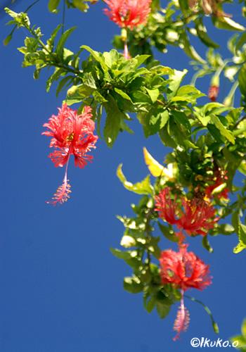 風に揺れる花