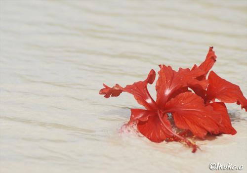 波に押される花