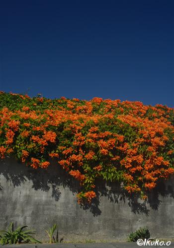 青空とオレンジの花