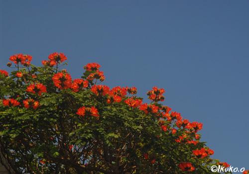 緑を縁取るオレンジの花々