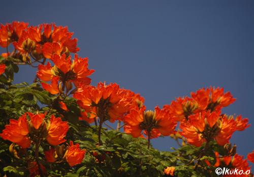 咲き乱れる花々