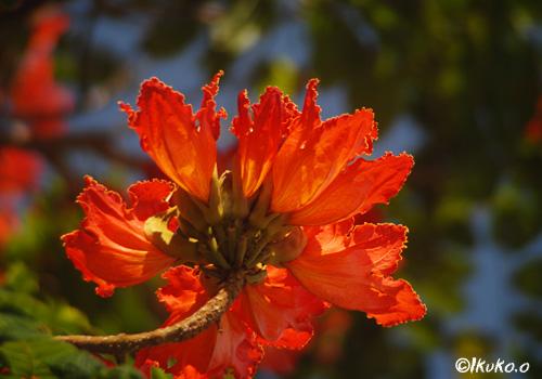 咲き乱れる火焔の花