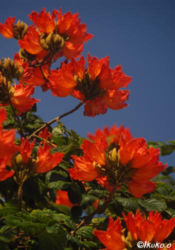 空へと首をのばす花