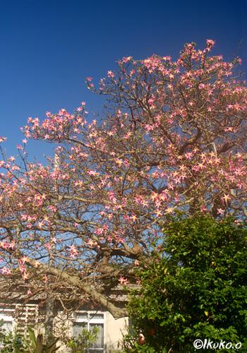 桜のような木