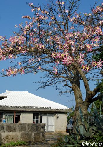 古い民家とトックリキワタの木